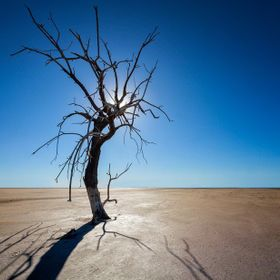 Tree at Salton Sea