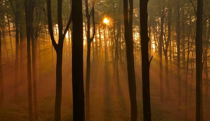 Muziekbos2 by LucBaekelandt - Silhouettes Of Trees Photo Contest
