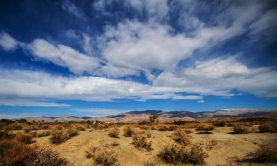 Palm Springs Desert Oasis