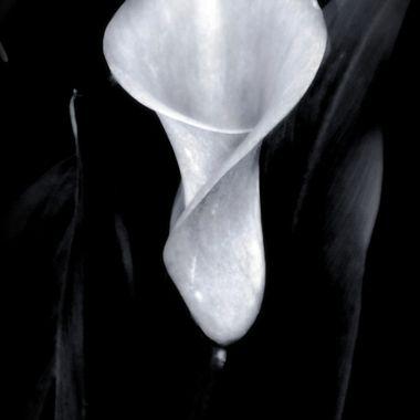 Lily in Black & White
