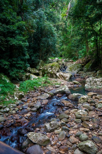 Springbrook Stream 2