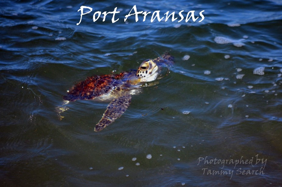 In the gulf at Port Aransas Texas
