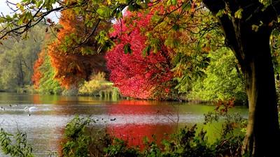 Vyne lake autumn colours