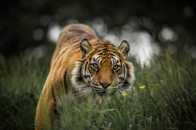 On the prowl by DPMPhotography