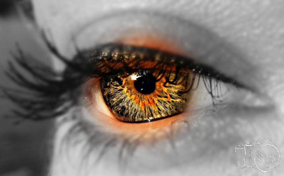 blue eye - macro