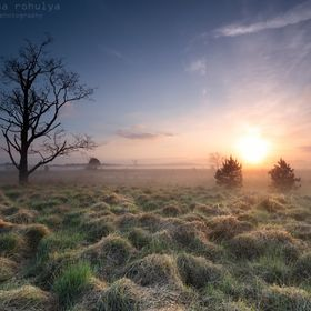 Misty sunrise over spring meadow. Kampina, North Brabant, the Netherlands