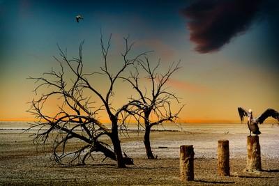 Dried Sea