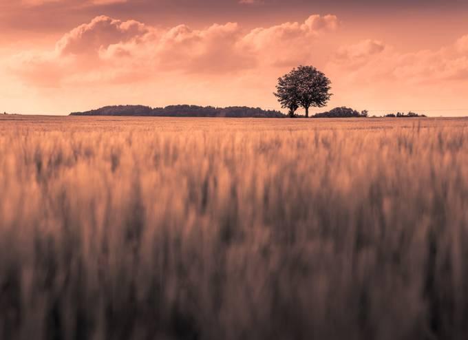 Lonely Tree by alex_artes - Unforgettable Landscapes Photo Contest by Zenfolio