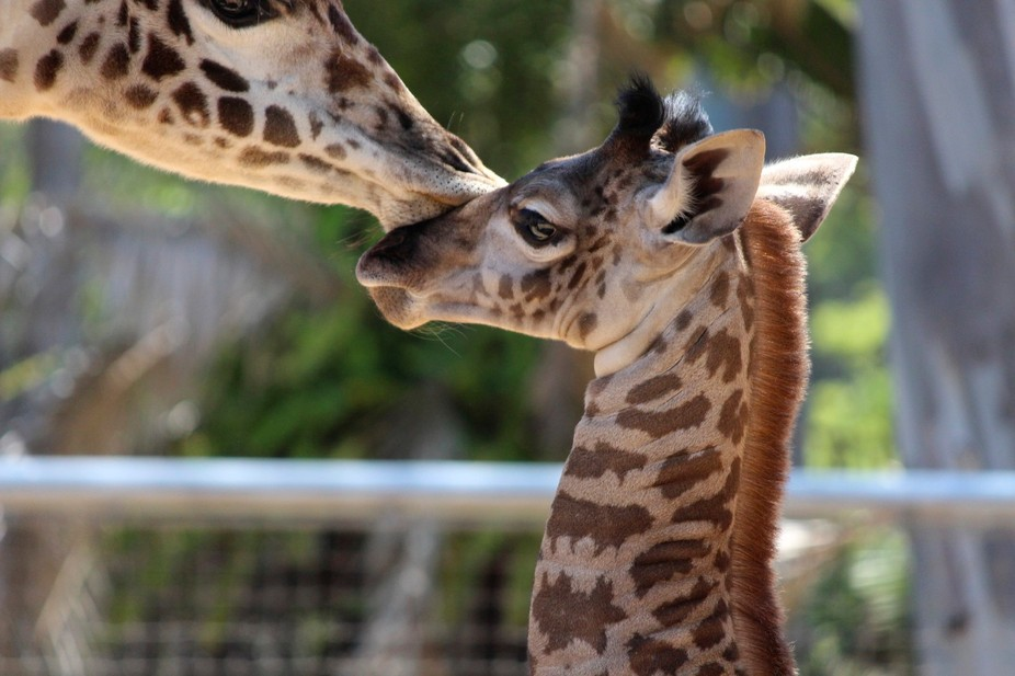 mother\'s kiss