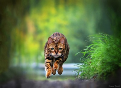 Hovering cat!