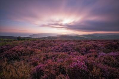 Dawn on Exmoor