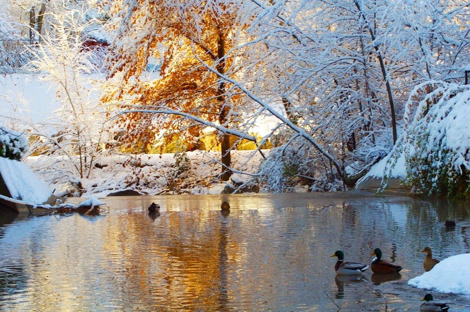 walk through a duck park in the winter