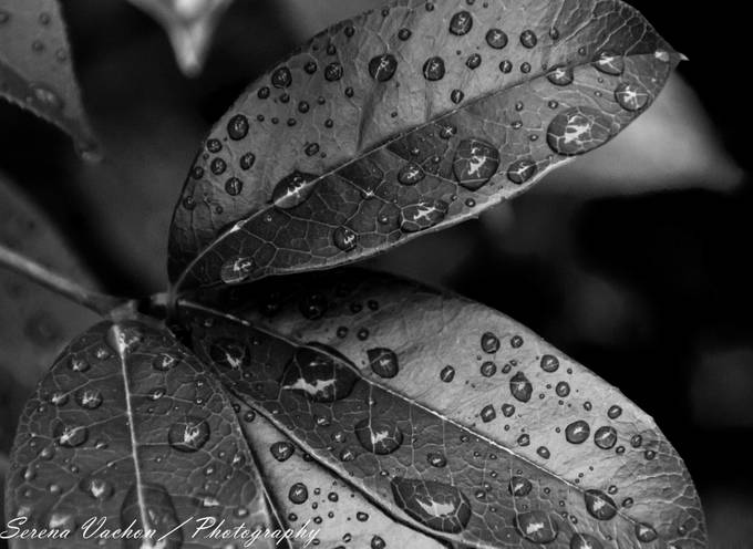 High Contrast In Black And White Photo Contest Winners