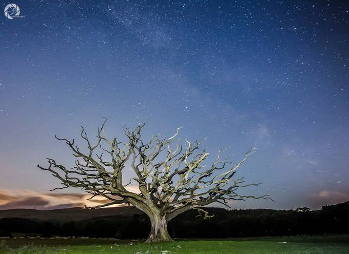 Beauty and the Beast by jonnywilliams - A Lonely Tree Photo Contest