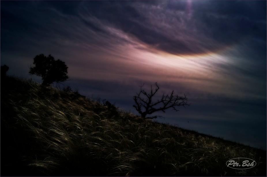 "Landscape with a dry tree. Ukraine, the National Park ""Khortytsya Island."""