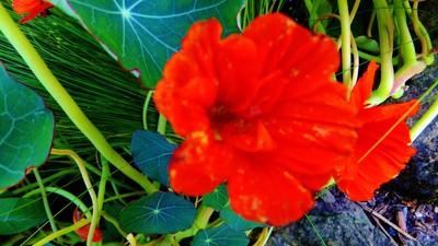 blooming.........