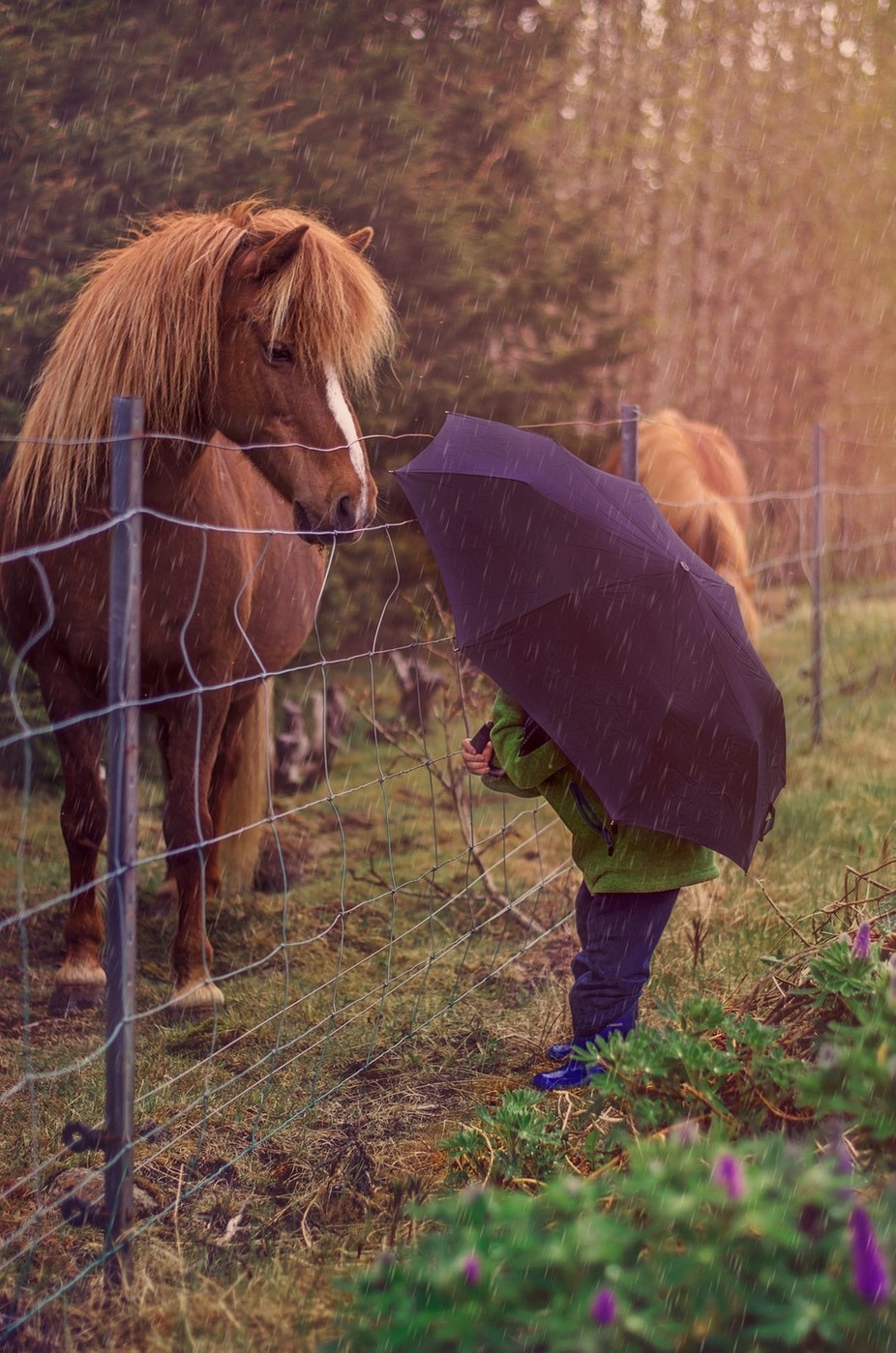 Horses and humans  by IrisBergmann - Fences Photo Contest