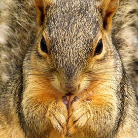 Squirrel Close up