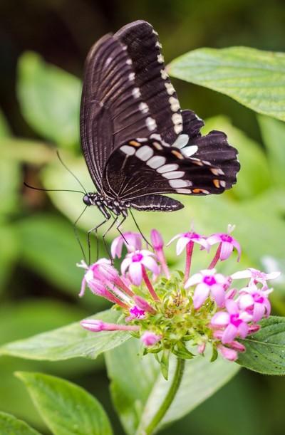 Butterfly #7.