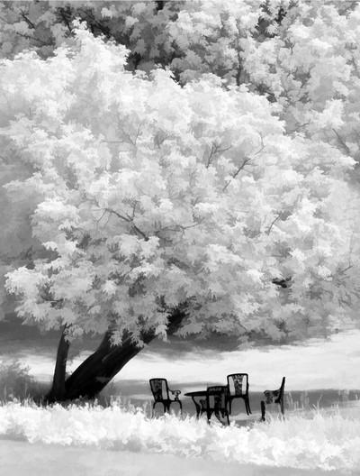Peaceful Scene in Infrared