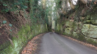 Narrow Country Lane 1