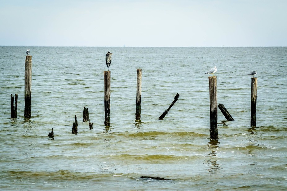 When I took this I was disappointed there were no pelicans but shot it anyway.  When I finally lo...