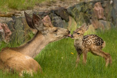 First kiss from Mom