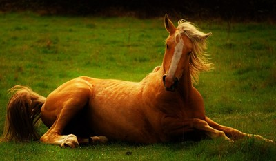 Wild Horses of the Okanagan Valley