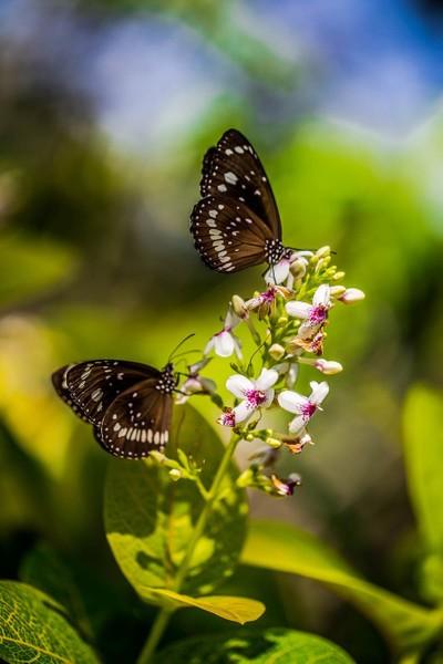 butterflies & flower