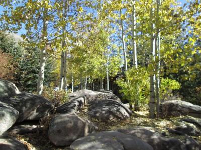 Alpine Garden Aspen Trees