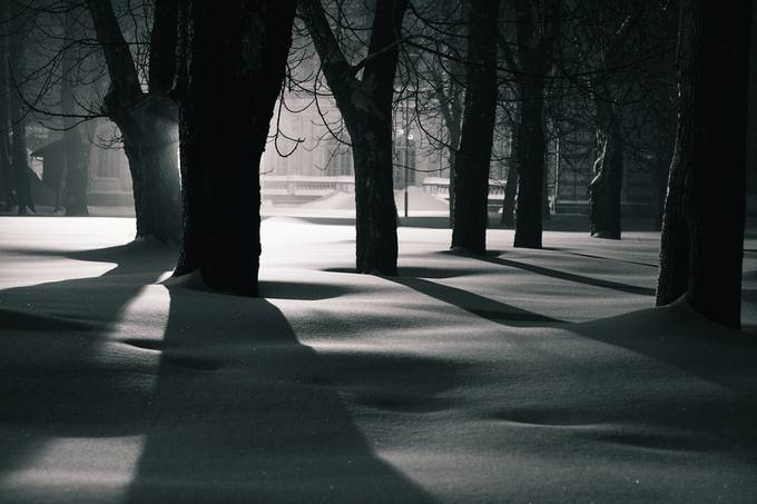 Night shadows by jevgenijscolokov - Silhouettes Of Trees Photo Contest