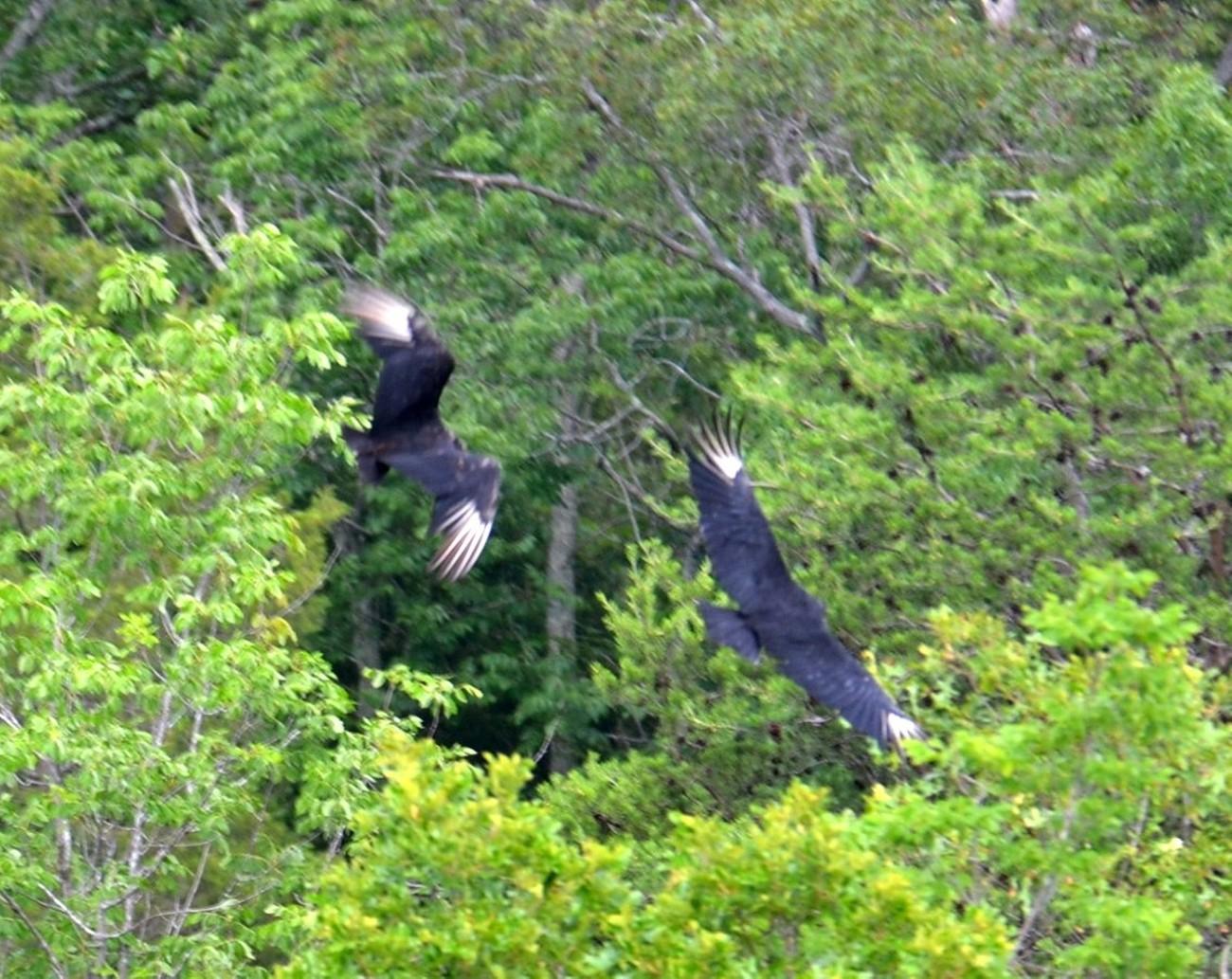 Great Falls, National Park, Great Falls, Maryland