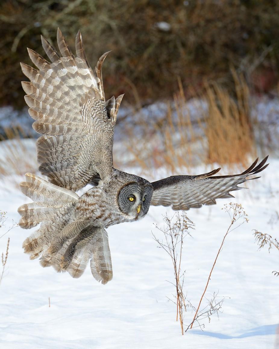 Open Wings Photo Contest Winners - ViewBug.com