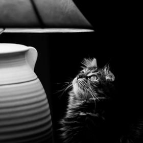 I luckily had my camera within arms reach one night when our cat caught sight of a moth flying around in the lampshade. She was mesmerized for a ...