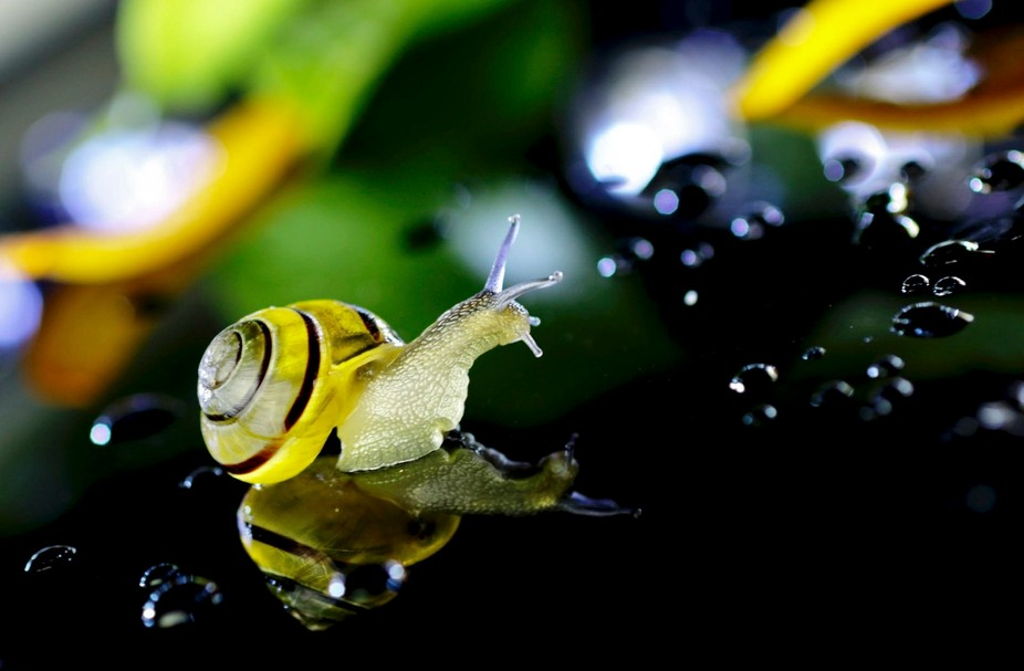 Noticed a great opportunity for reflection when a snail happened across the smoky glass patio tab...
