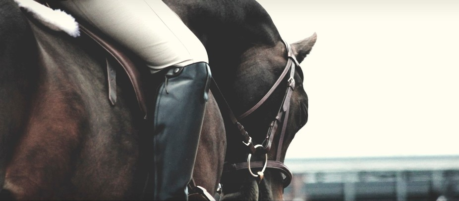 Taken during a horse show