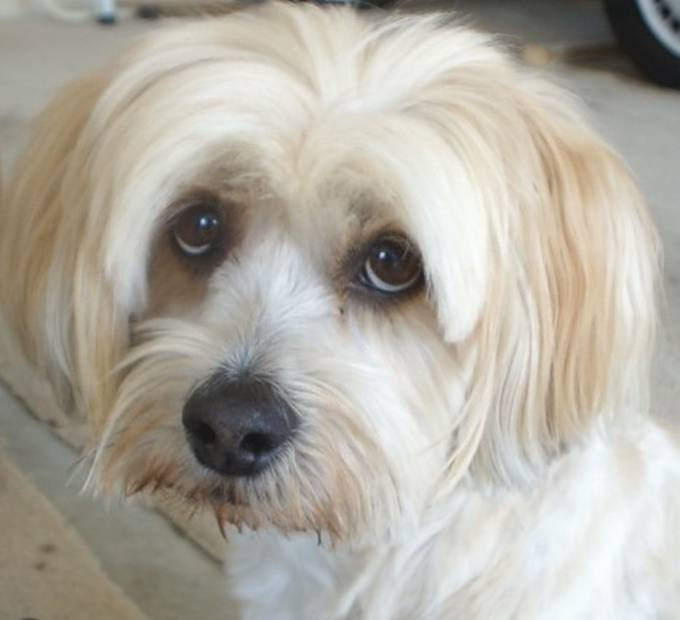 One of my previous dogs (a Lhasa Apso) would give us this look from time to time and we found it hilarious; we called it her Princess Di look because that's just what it looked like!