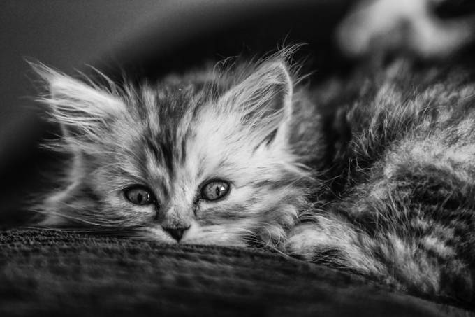 Hendrix the house cat by Force - Cute Kittens Photo Contest