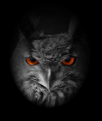 eagle owl face on oil