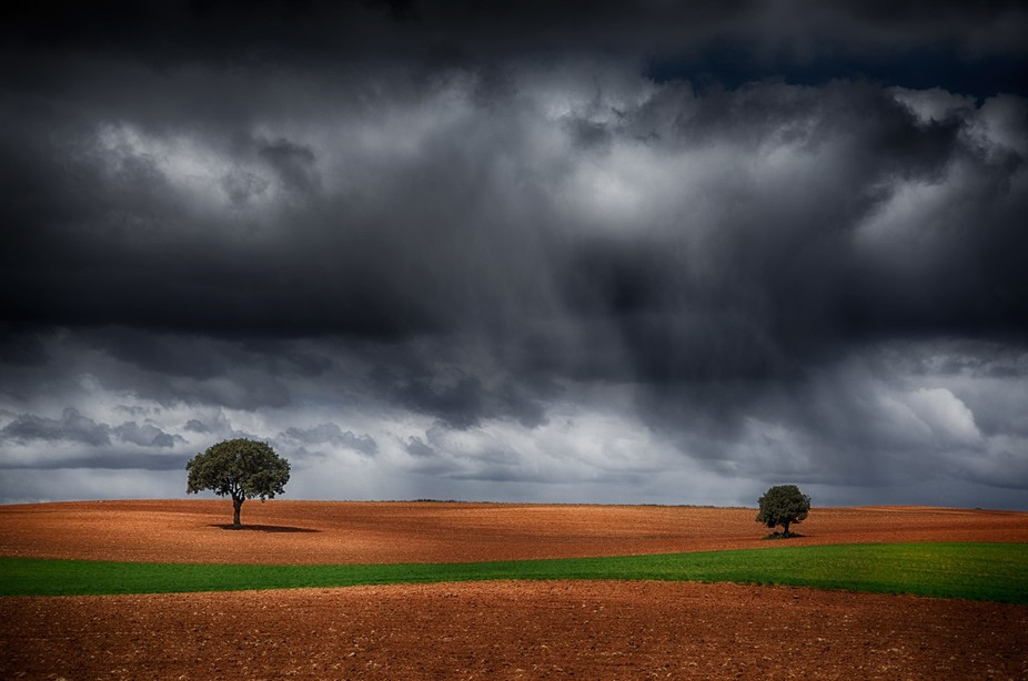 lonely oaks under the storm in winter