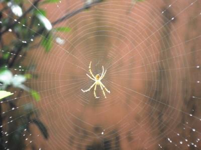 the cobweb copy