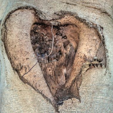 Tree With A Heart or Nature With  a Wicked Sense of Humour