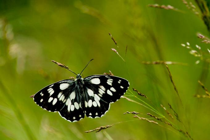 butterfly by christianchrustev - Beautiful Butterflies Photo Contest