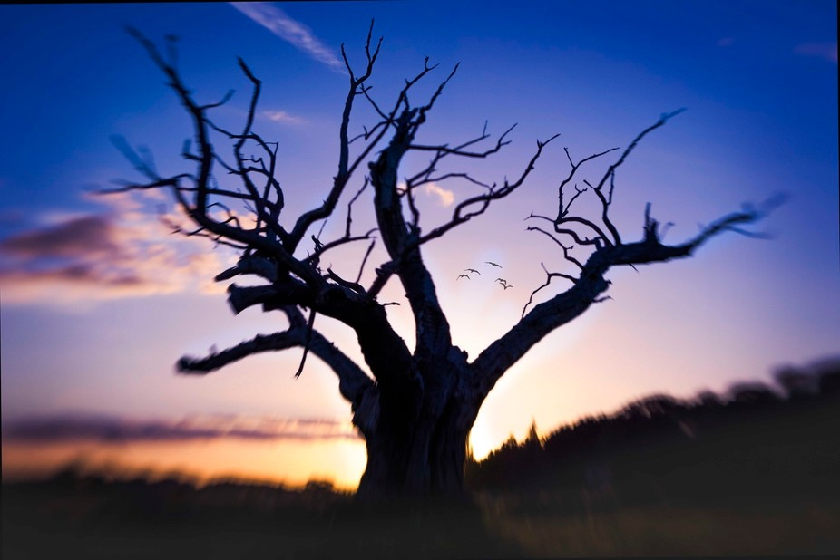 whilst out with a friend who is just getting into photography, I stumbled upon this tree at the m...