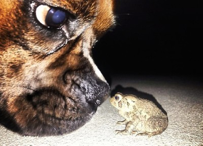 Dog and a Frog
