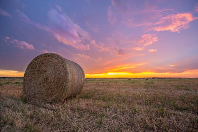 Golden Fields  by simalg05 - Dry Fields Photo Contest