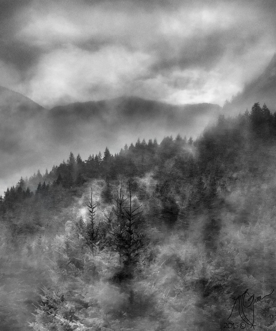 Feels Like Home by ntgreen - Tree Silhouettes Photo Contest