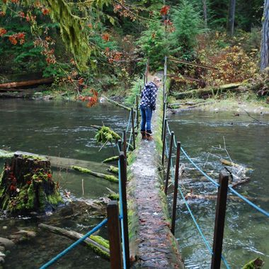 Big Qualicum River Fish Hatchery - Dead Salmon everywhere - 2013 - CANADA