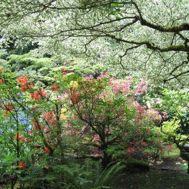 Taken at Buchard Gardens in Victoria, British Columbia, Canada