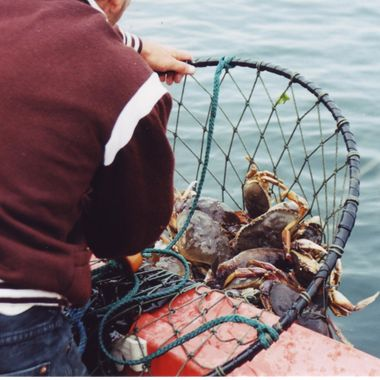 Crab (fishing) for dinner - BC's West Coast 2000 Saturnina Island